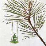 Vihreänpullea metsän kirva